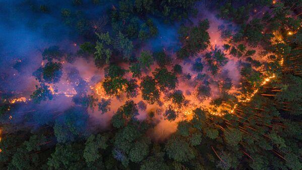 Hořící les v ruské Krasnojarské oblasti. - Sputnik Česká republika