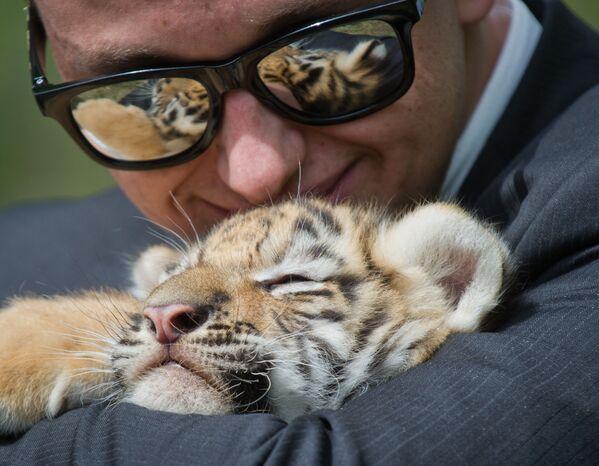 Návštěvník krymského parku Tajgan se fotí s tygřetem. - Sputnik Česká republika