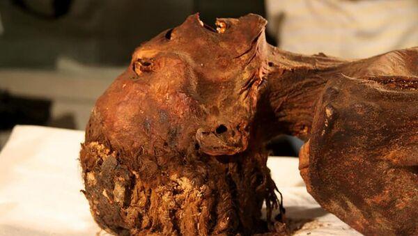 Křičící mumie - Sputnik Česká republika