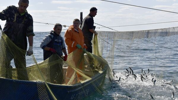 Masový výlov ryb - Sputnik Česká republika