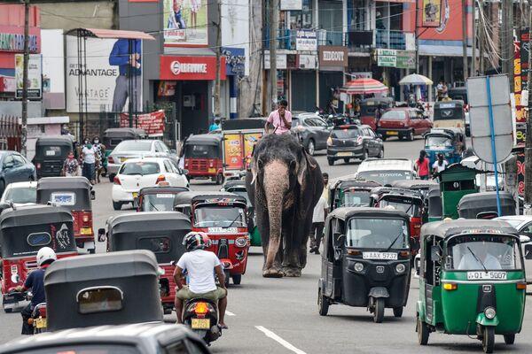 Mladý muž jede na slonu po ulici s automobilovým provozem v Pilijandalu na Srí Lance, Columbo - Sputnik Česká republika