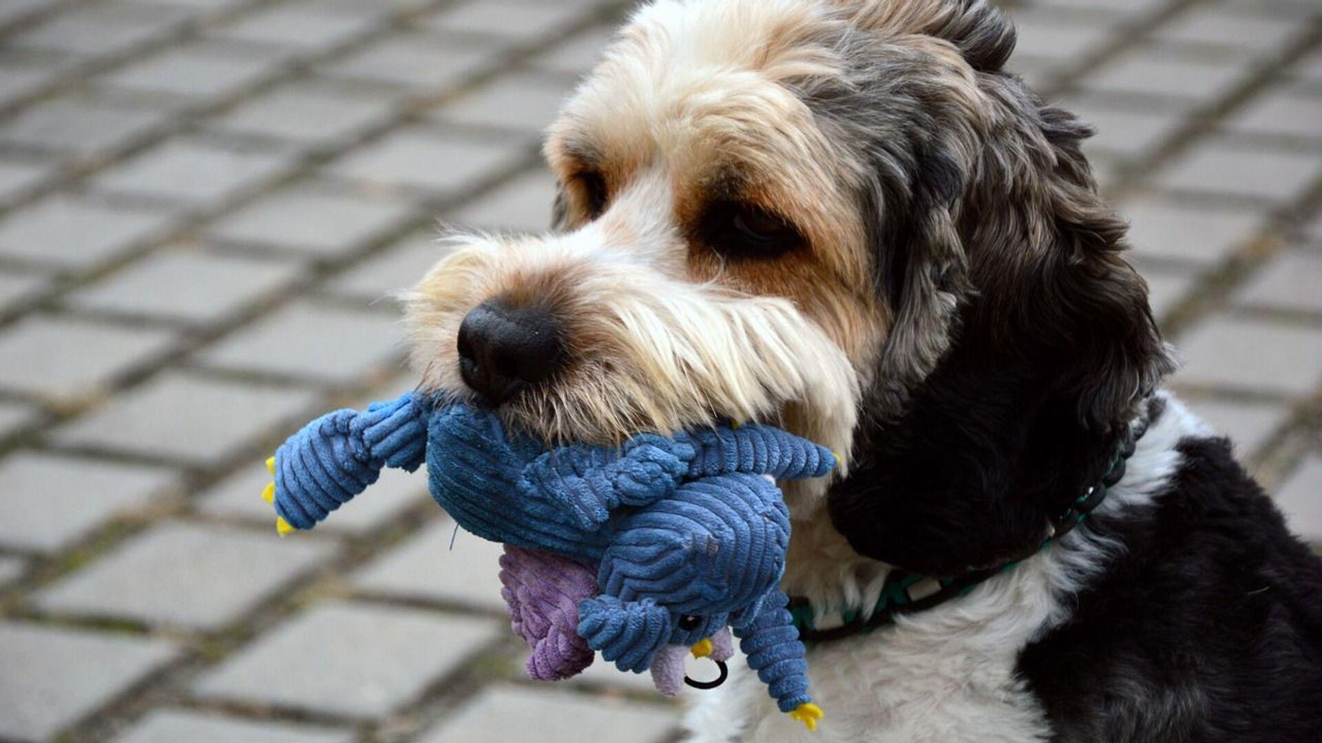 Pes s hračkou - Sputnik Česká republika, 1920, 02.07.2021