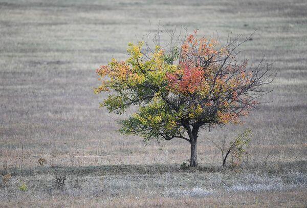 Sametová sezóna: Podzim je ideální čas na to objevovat krásy Krymu - Sputnik Česká republika