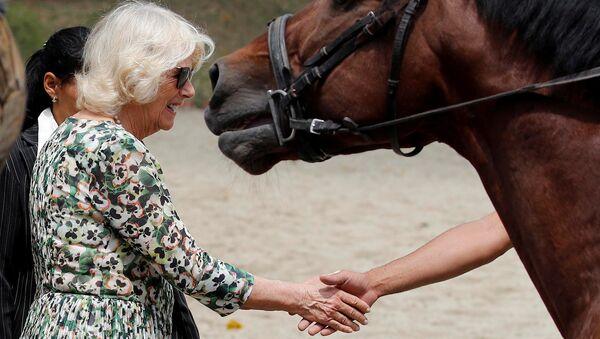 Camilla, vévodkyni z Cornwallu, během návštěvy Národního jezdeckého centra v Havaně, Kuba - Sputnik Česká republika