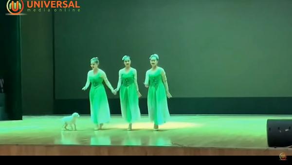 Toulavý pes z Číny vyběhl na pódium a stal se taneční hvězdou - Sputnik Česká republika