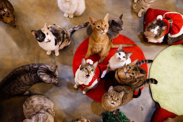 Kočky se dívají na Catgarden v Soulu, Jižní Korea - Sputnik Česká republika