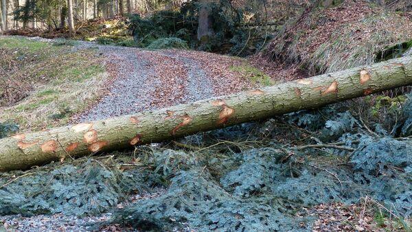 Popadaný strom  - Sputnik Česká republika