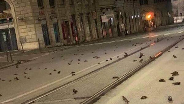 Mrtví ptáci v Římě - Sputnik Česká republika