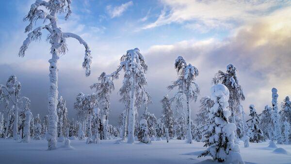 Sergej Mežin: Uralské palmy. Permská oblast, rok 2020 - Sputnik Česká republika