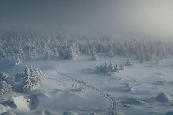 Jevgenija Golubenecová: Cesta do království vánočních stromků. Čeljabinská oblast, rok 2020 - Sputnik Česká republika