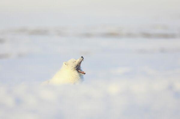 Vasilij Baranjuk: Bílý krokodýl. Čukotská autonomní oblast, rok 2020 - Sputnik Česká republika