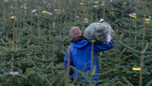 Vánoční stromečky na německé farmě. Ilustrační foto - Sputnik Česká republika