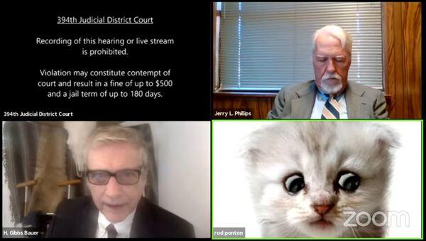 Právník v Texasu se omylem připojil k online soudnímu jednání s kočičím filtrem - Sputnik Česká republika