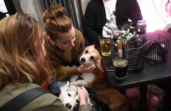 Návštěvníci se svými domácími mazlíčky v baru Underdog v Moskvě.  - Sputnik Česká republika