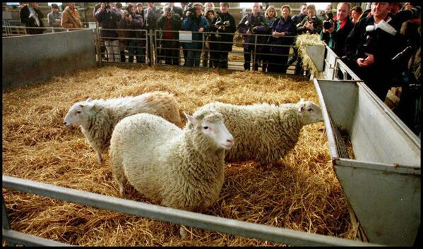 Klonovaná ovce Dolly - Sputnik Česká republika