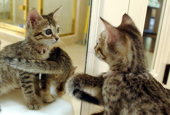 Klonovaná koťata v San Francisku - Sputnik Česká republika