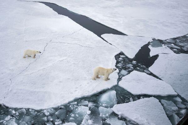 Lední medvěd s malým medvídkem v oblasti Země Františka Josefa v Barentsově moři. - Sputnik Česká republika