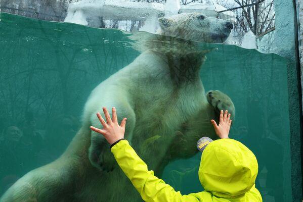 Lední medvěd v Prijamurské zoo Sysojeva v Chabarovsku. - Sputnik Česká republika