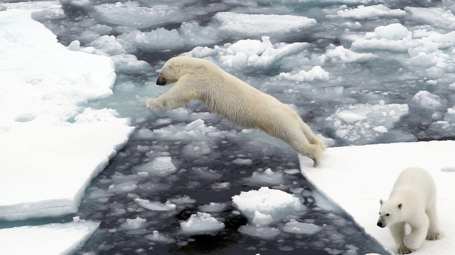 Lední medvědi na ledových krách v Severním ledovém oceánu. Ilustrační foto - Sputnik Česká republika, 1920, 18.09.2021