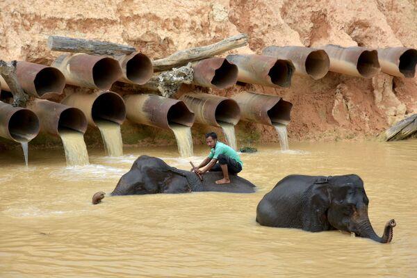 Muž koupe slony v indonéské provincii Riau. - Sputnik Česká republika