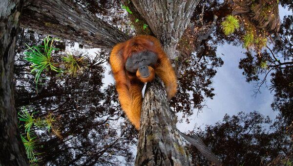 Svět se obrátil vzhůru nohama! Soutěž World Nature Photography Awards 2020 vyhlásila vítěze, je mezi nimi i Čech - Sputnik Česká republika