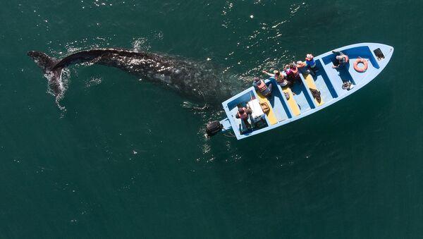Natáhni ruku a pohlaď velrybu. Turistická senzace v Mexiku - Sputnik Česká republika