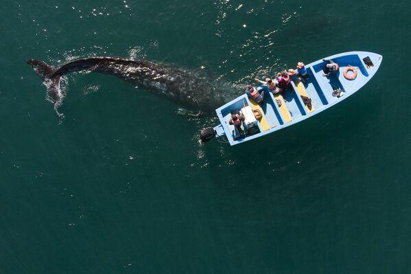 Pohled z výšky na velrybu šedou, která připlula k malému člunu v Mexiku. - Sputnik Česká republika