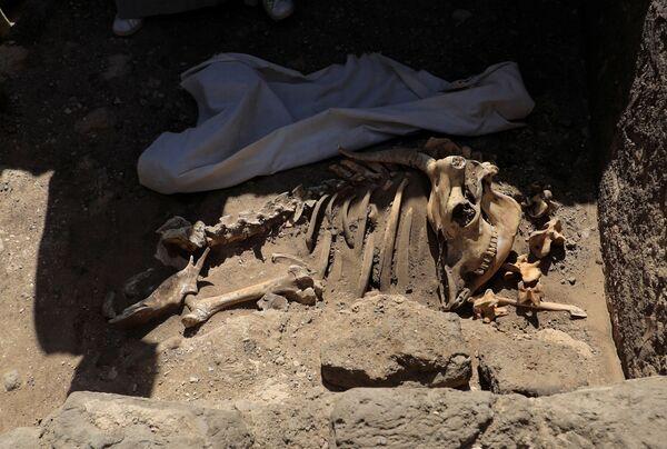 Kromě pozůstatků lidských kostí archeologové nalezli také pozůstatky zvířecích kostí.  - Sputnik Česká republika