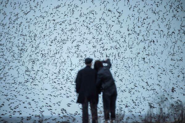 Pár pozoruje stěhovavé ptáky v severovýchodní čínské provincii Liao-ning - Sputnik Česká republika