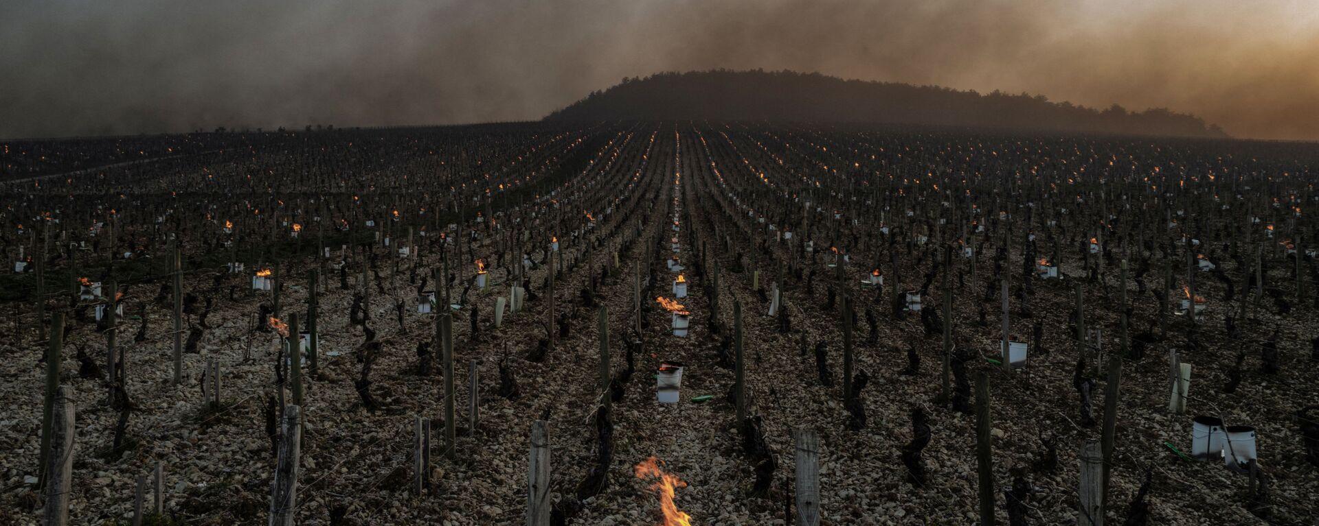 Kvůli silným mrazům zapálili místní farmáři více než 2 000 speciálních svíček – sudů naplněných hořícím parafínem, aby réva nezmrzla - Sputnik Česká republika, 1920, 17.04.2021