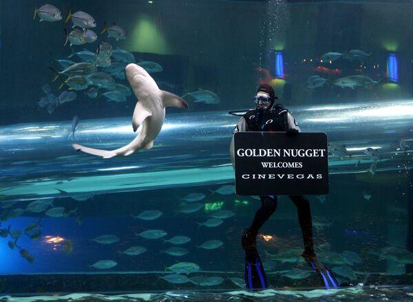 Nejstrašidelnější bazén v americkém hotelu Golden Nugget - Sputnik Česká republika