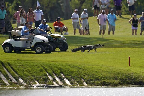Zástupci golfového turnaje v Louisianě doprovázejí aligátora do vody - Sputnik Česká republika