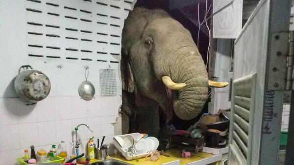 Пробивший стену жилого дома слон в Таиланде - Sputnik Česká republika