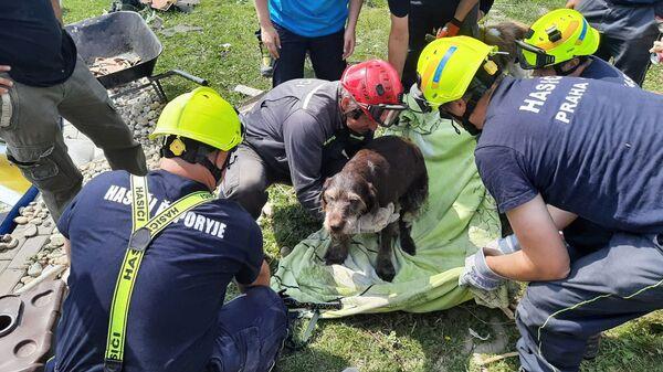 Чешские спасатели спасли из-под завалов собаку в деревне Моравска-Нова-Вес, пострадавшей от торнадо, Чехия - Sputnik Česká republika