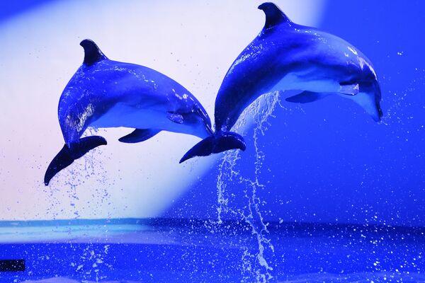 Дельфины во время репетиции дельфин-шоу «Легенда начинается» в океанариуме Дельфин в Екатеринбург - Sputnik Česká republika