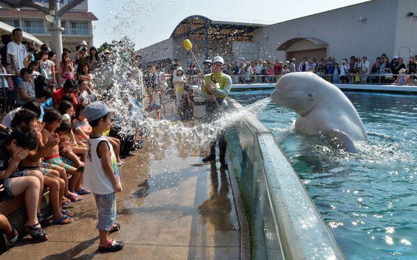 Běluha stříká vodu na návštěvníky letní atrakce v Japonsku - Sputnik Česká republika