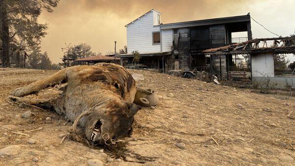 Сгоревшее животное во время природных пожаров в Турции - Sputnik Česká republika