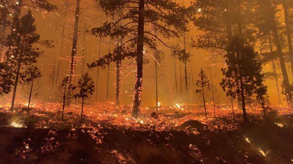 Горящий лес в Калифорнии, США - Sputnik Česká republika