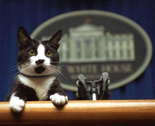 Kocour prezidenta Billa Clintona Socks se dívá na tribunu v zasedací místnosti Bílého domu ve Washingtonu - Sputnik Česká republika