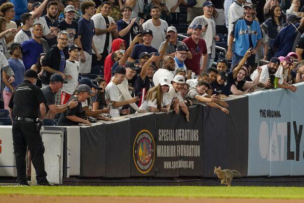 Поклонники радуются, когда видят кошку на поле бейсбольного матча, США - Sputnik Česká republika