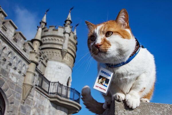 Знаменитый кот Мостик, ставший символом строительства Крымского моста - Sputnik Česká republika
