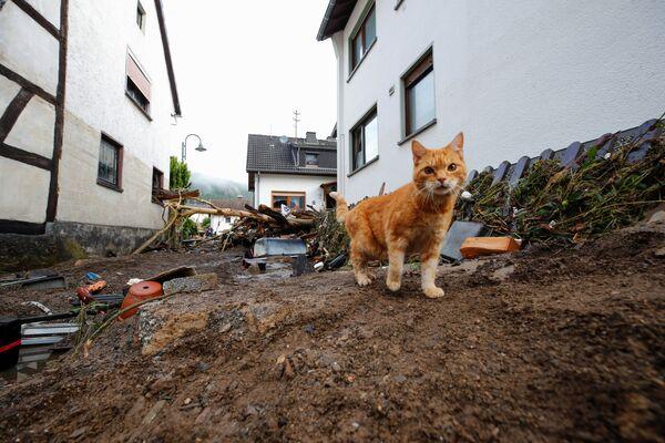 Kočka kráčí vedle smetí přivezeného povodní po silných deštích v německém Schuldu - Sputnik Česká republika