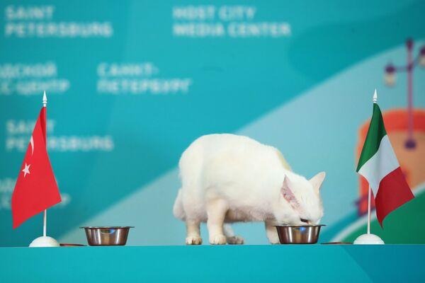 Эрмитажный кот-оракул Ахилл предсказал победу сборной Итали - Sputnik Česká republika