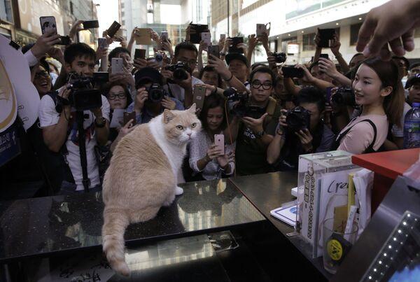 Фотографы и фанаты фотографируют знаменитого гонконгского кота Brother Cream - Sputnik Česká republika