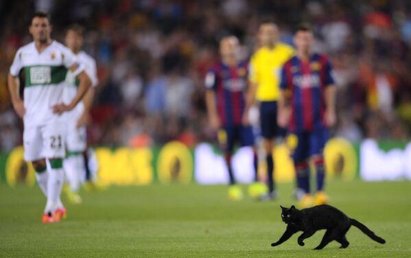 Kočka běží přes pole během fotbalového zápasu na stadionu Camp Nou ve španělské Barceloně - Sputnik Česká republika