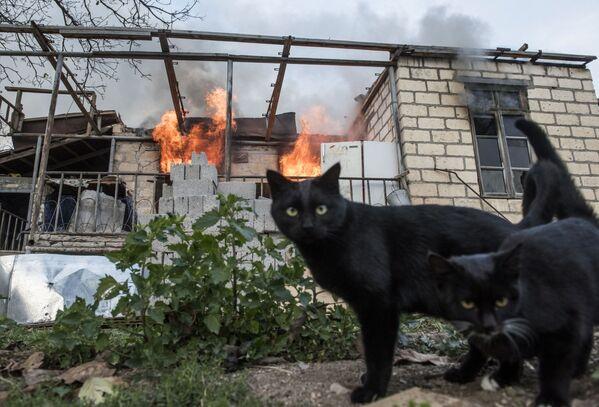 Кошки неподалеку от горящего дома в поселке Карегах в Нагорном Карабахе - Sputnik Česká republika