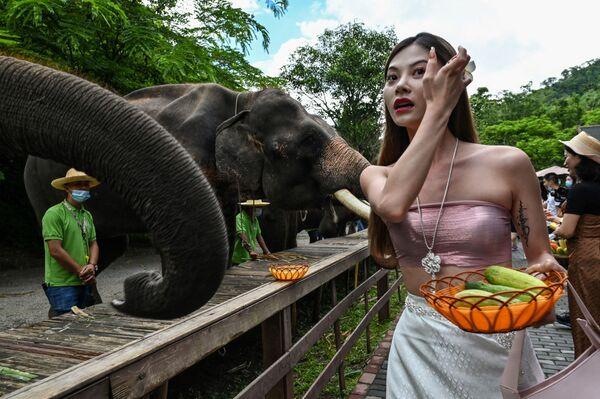 Dívka krmí slony v Údolí divokých slonů, přírodní rezervaci pro divoké slony, v provincii Jün-nan v jihozápadní Číně - Sputnik Česká republika