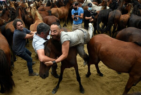Aloitadoři bojují s divokými koňmi během tradiční akce Stříhání zvířat ve španělské vesnici Sabucedo - Sputnik Česká republika