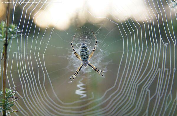 Pavouk v uzavřené černobylské zóně. - Sputnik Česká republika