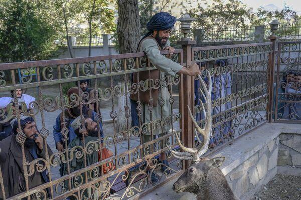 Bojovník Tálibánu (organizace zakázaná v Rusku) se dotýká jelena ve výběhu v kábulské zoo - Sputnik Česká republika
